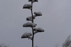 18-lorsque-la-neige-devient-une-oeuvre-dart