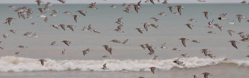 slider10 vol d'oiseaux migrateurs à longues sur mer