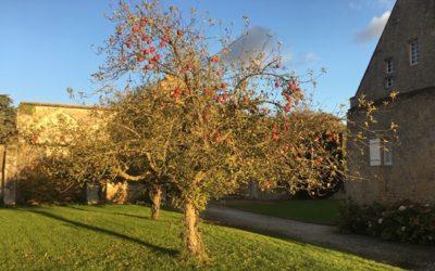27.10.20 Pommes en libre service à l'Abbaye